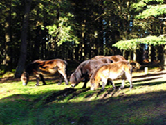 See the Exmoor ponies at Webbers Post